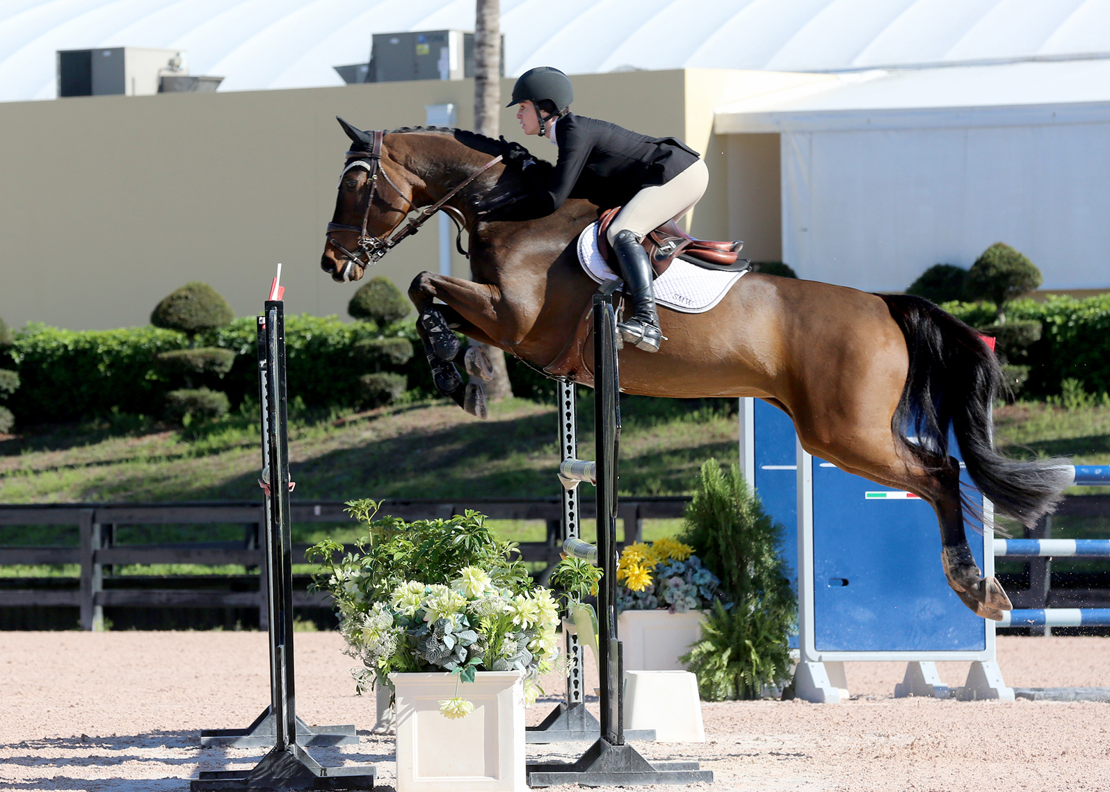 Showjumping horse world equestrian festival